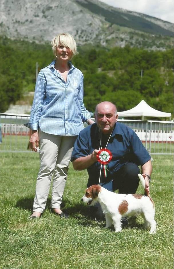 magna graecia jack russell: addestrare il cane per le expo