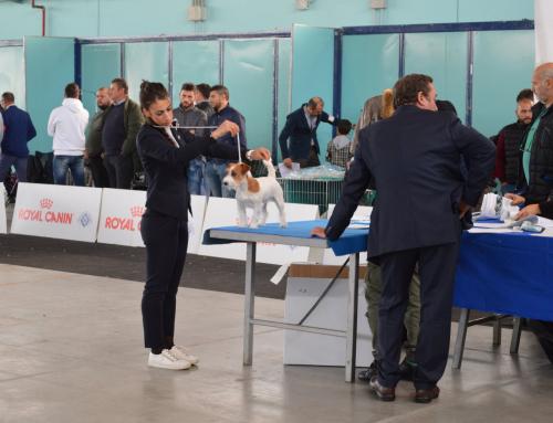 Expo Internazionale di Foggia