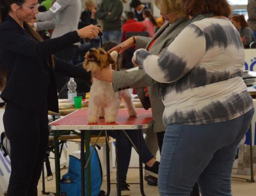 Expò Internazionale di Massa Carrara del 07 Gennaio 2017-Mostra Speciale Jack Russell Terrier