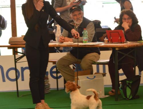 Esposizione Internazionale L'AQUILA del 21 Aprile 2018, presso Area Sport- Monticchio (AQ). Giudice Sig.ra Maissen-Jarisch Heliane Mag.