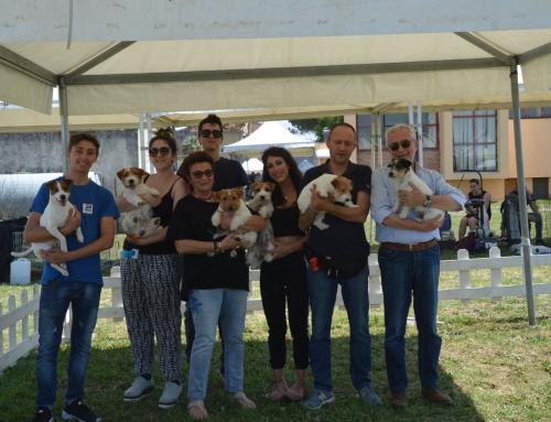 13° Esposizione Internazionale di Vibo Valentia, in Rende (CS) del 26 Maggio 2018, Giudice Dott. Alberto Cuccillato (IT)